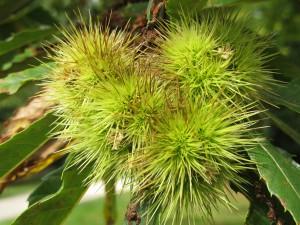 unidentified tree flower