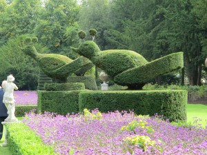 topiary birds at Cliveden