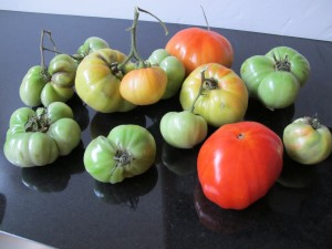 other tomatoes starting to ripen
