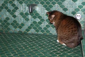 cat watching water drip