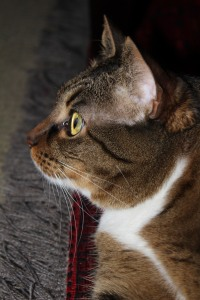 cat profile