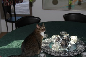 cat looking guilty on the table