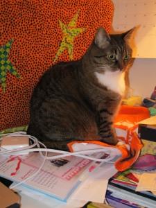cat on my desk