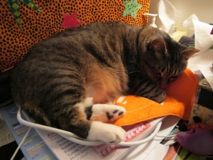 cat snoozing in the studio
