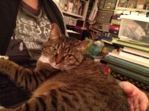 cat on my lap