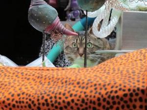 cat watching me