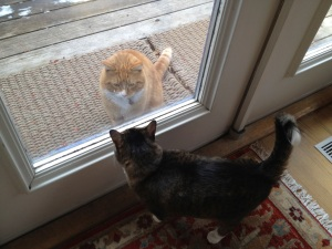 2 cats meeting through glass