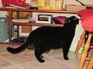 cat snooping