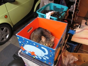 cat in box in garage