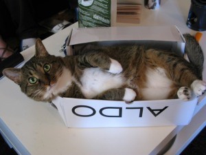 cat in shoe box