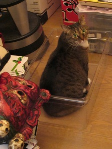 cat in sous vide container