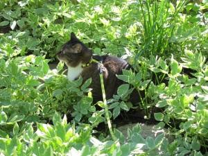 cat exploring the jungle
