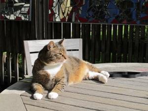 cat in the sun