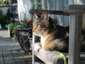 cat enjoying the yard