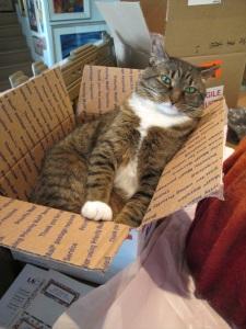 cat resting after her big adventure