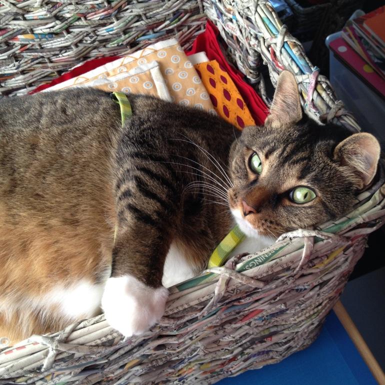 Kush in a basket