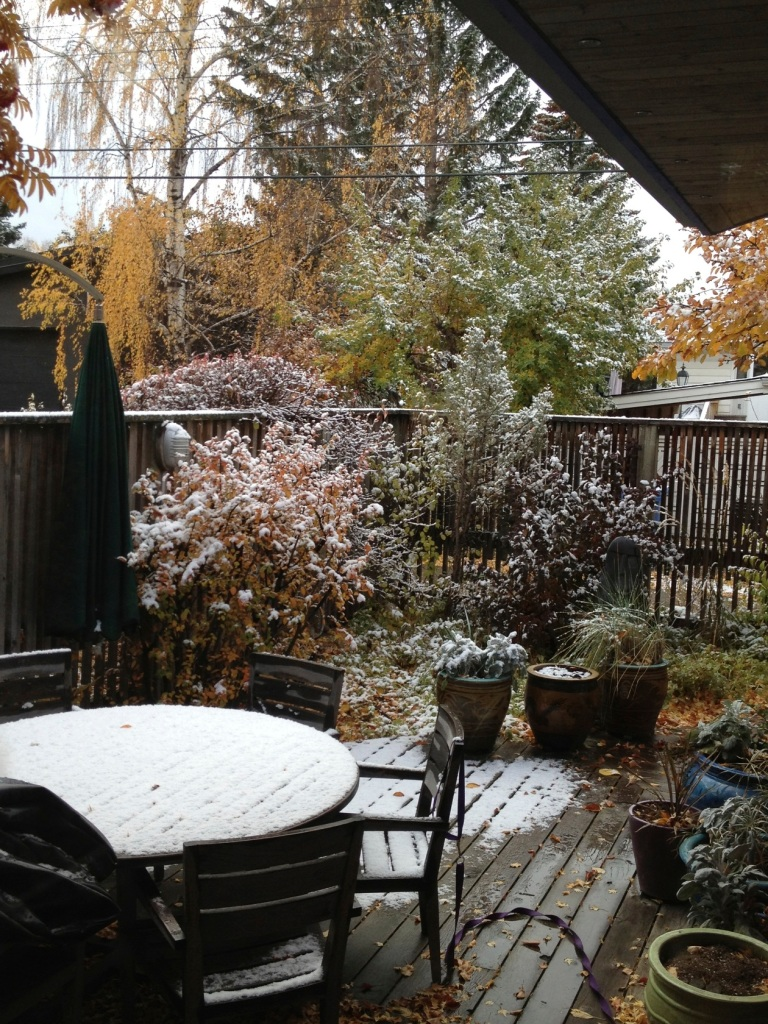 touch of snow in our yard
