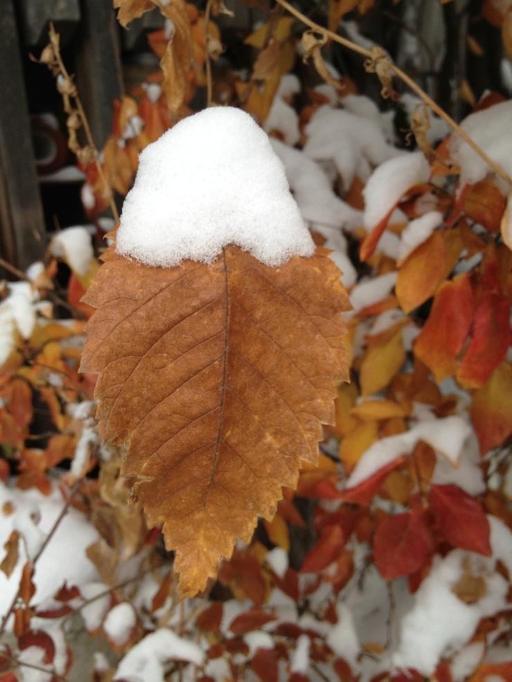 snowy leaf