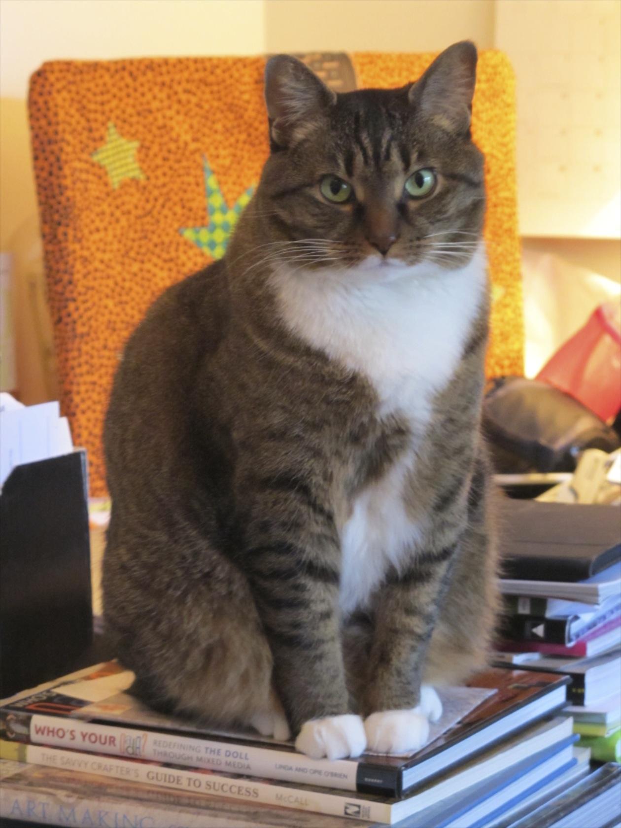 Kush the cat