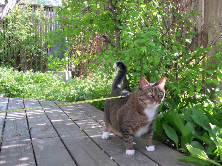 Kush in the garden