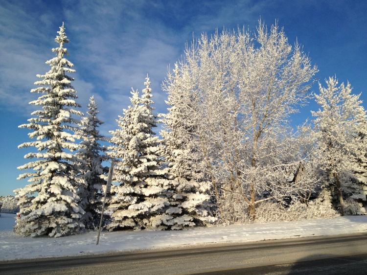 deep snow on trees