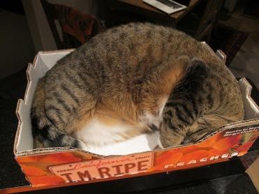 Kush in her peach box
