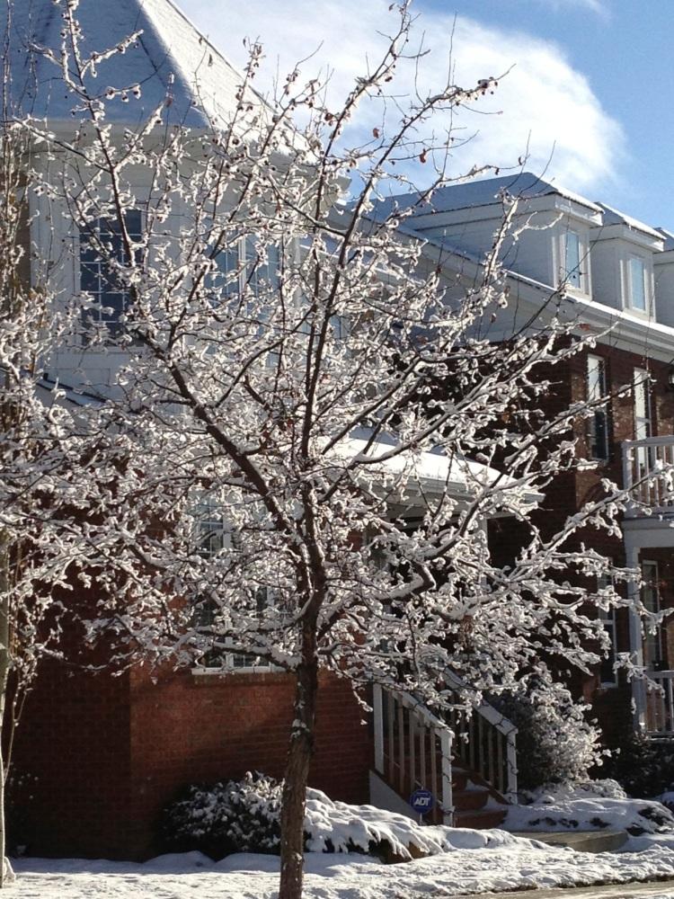 single snowy tree