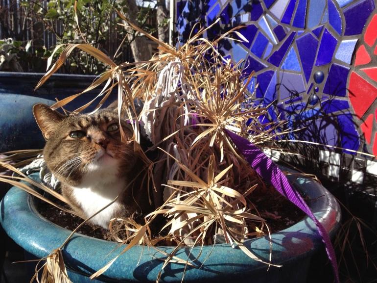 Kush in a flowerpot