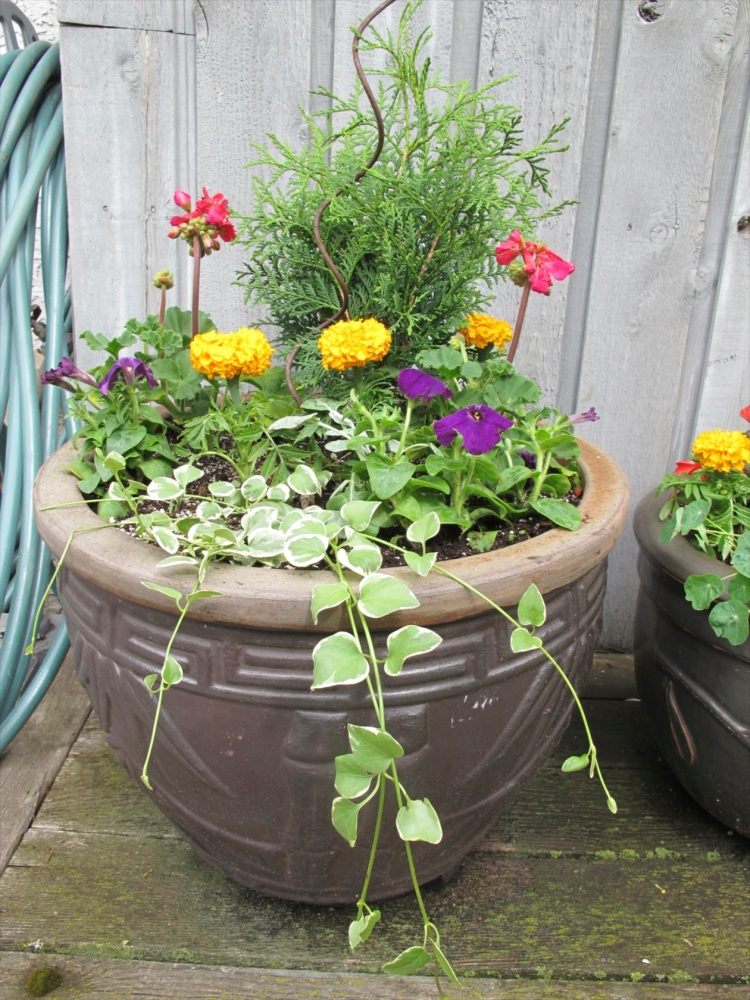 new plantings
