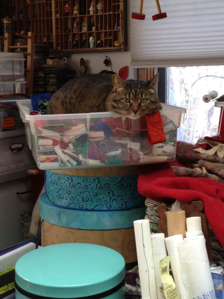 Kush in basket of fabric strips