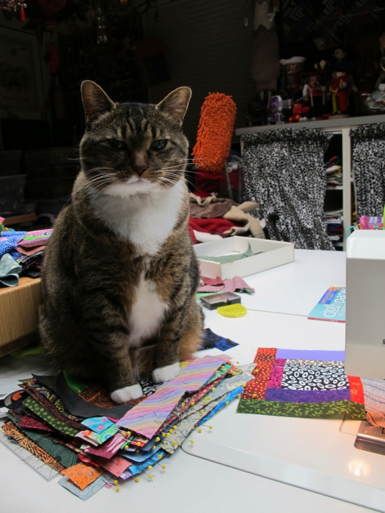 sitting on quilt blocks