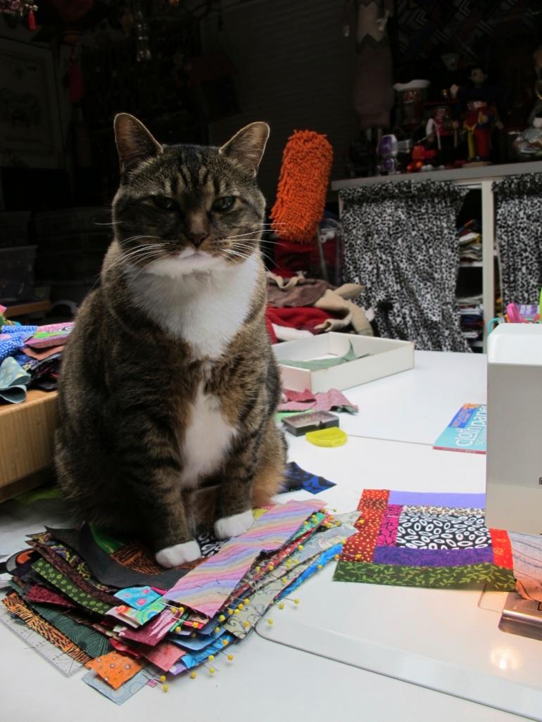 sitting on quilt blocks