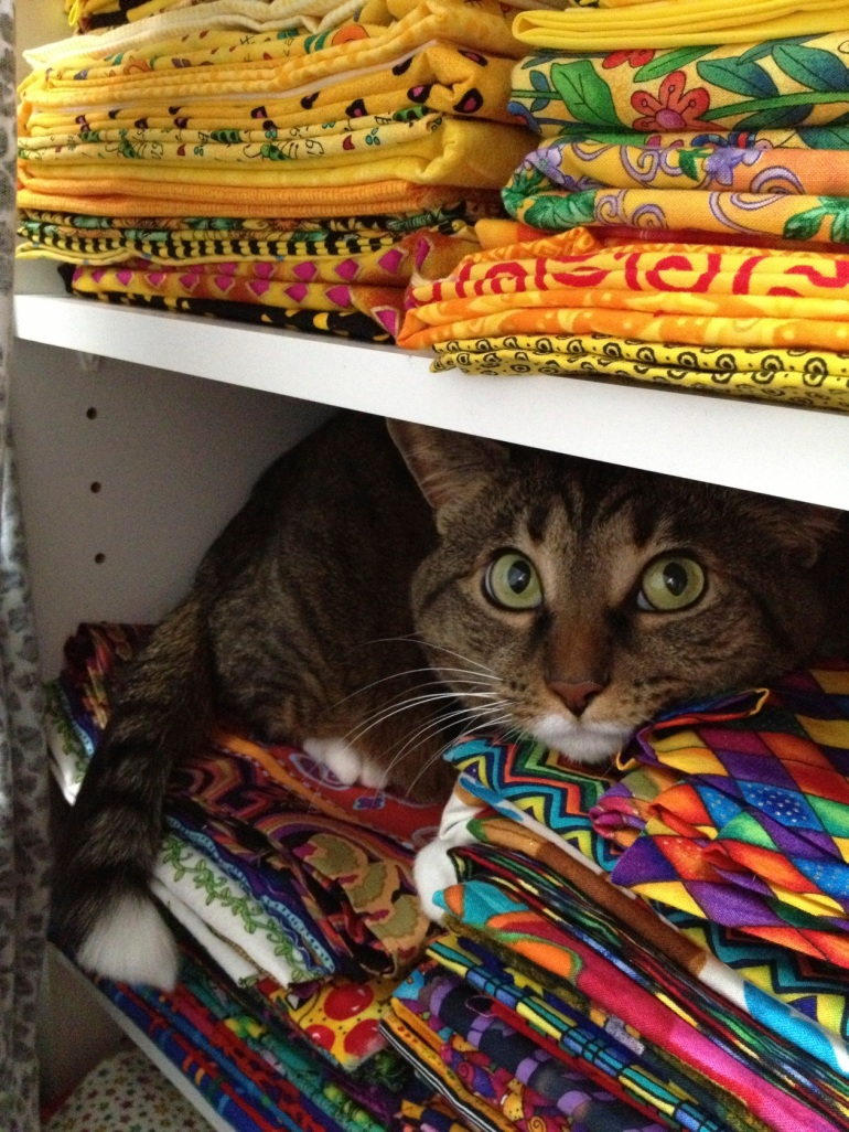 cat on fabric shelf