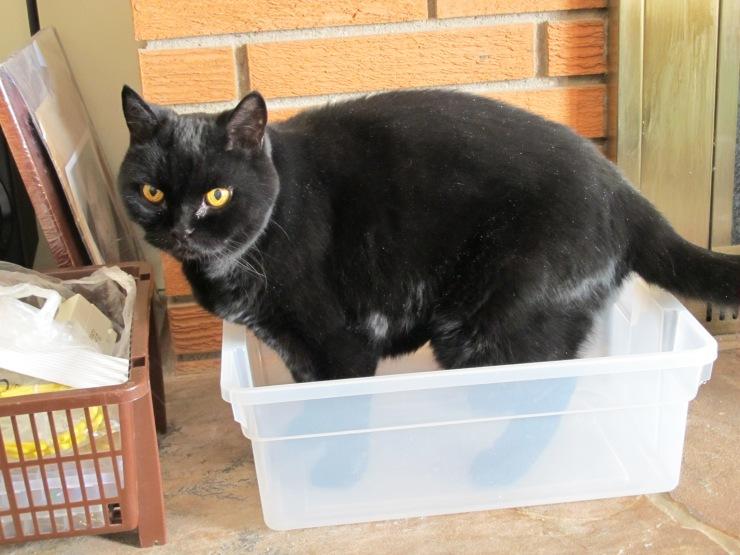 Felix in a box