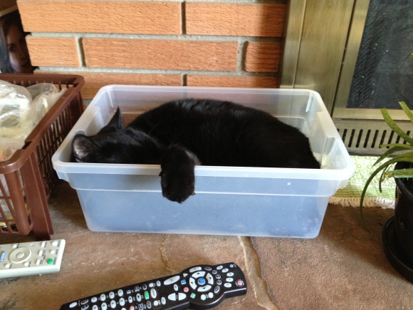 Felix the cat snoozing in Rubbermaid