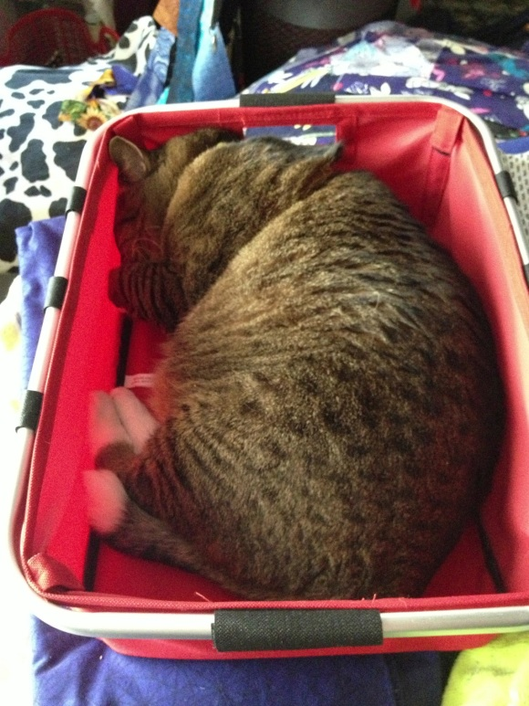 Kush the cat in a basket