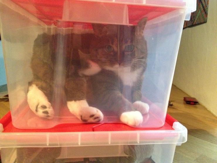 Kush the cat in storage