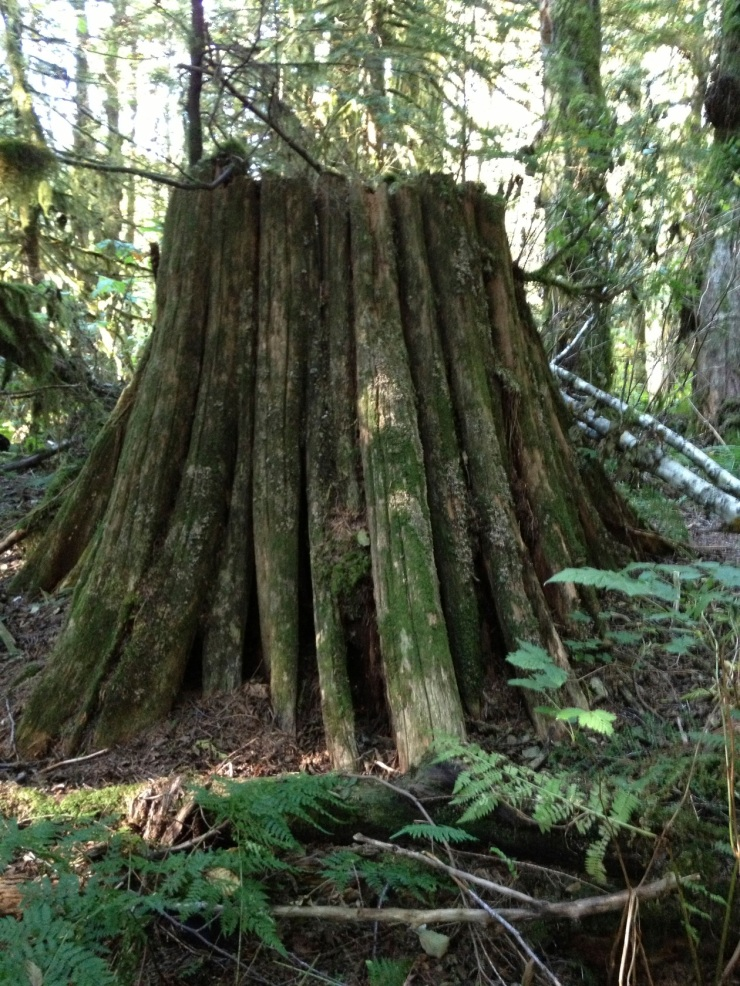large tree stump with moss