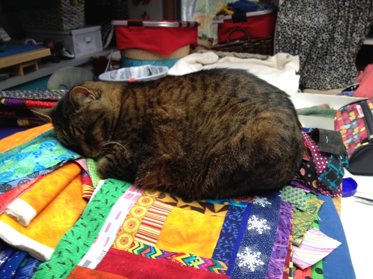 Kush sleeping on quilt blocks