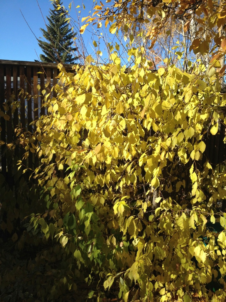typical fall colour