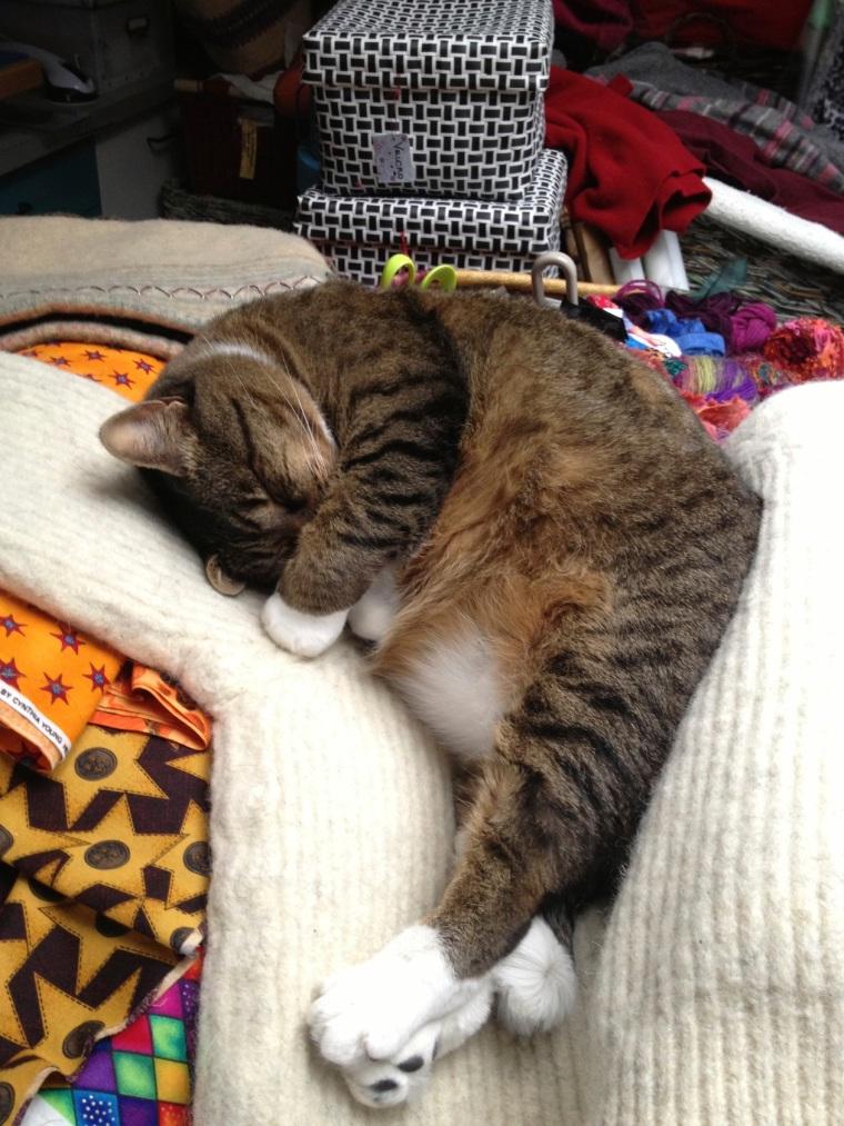 Kush sleeping