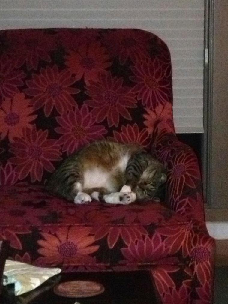 Kush sleeping on chair