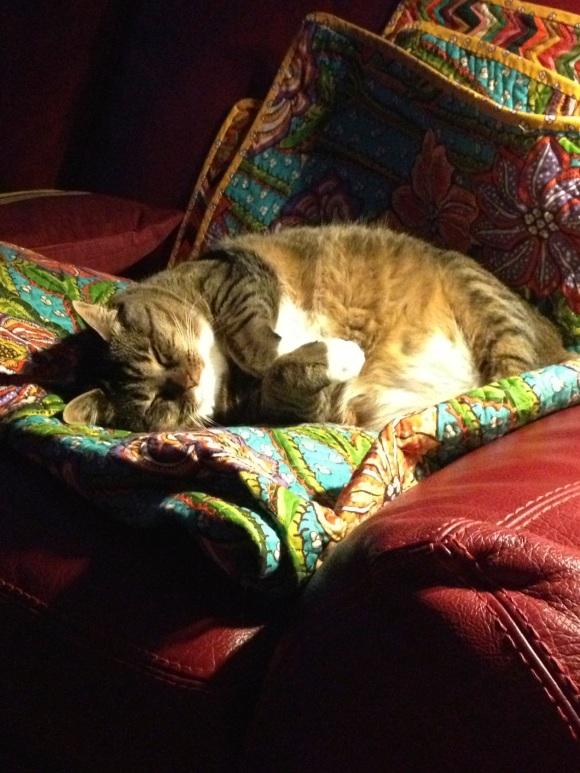 Kush sleeping on couch