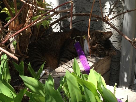 Kush in flower bed