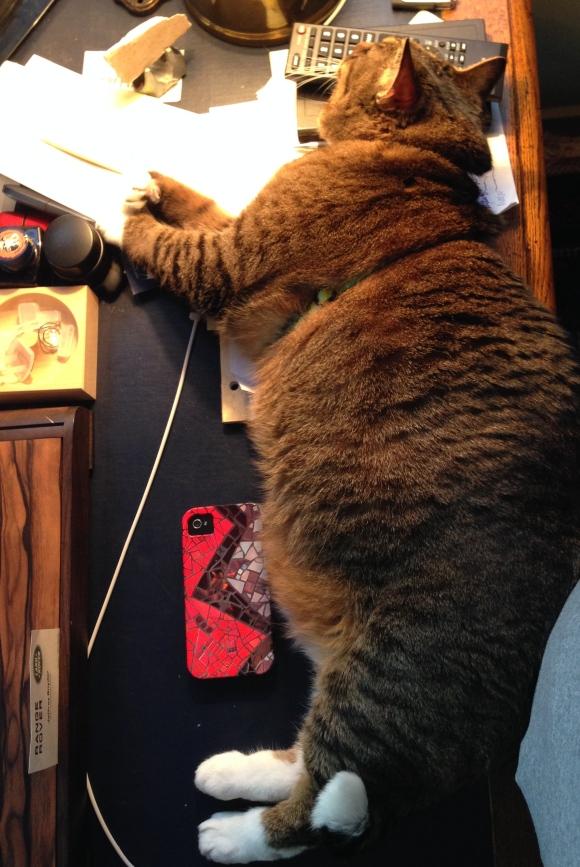 Kush the cat on the desk