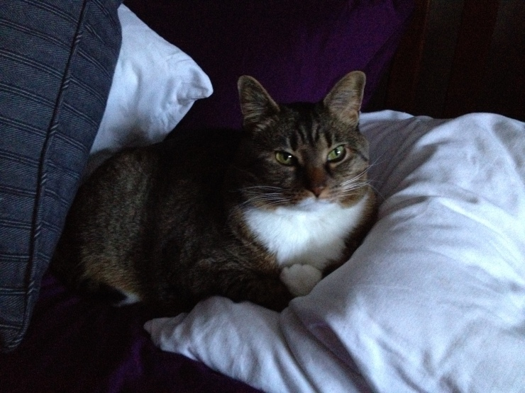 Kush on my pillow