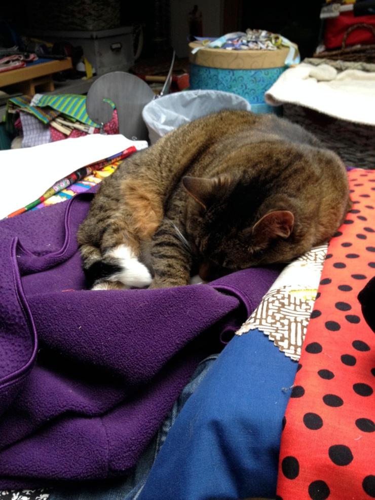 Kush sleeping in the studio
