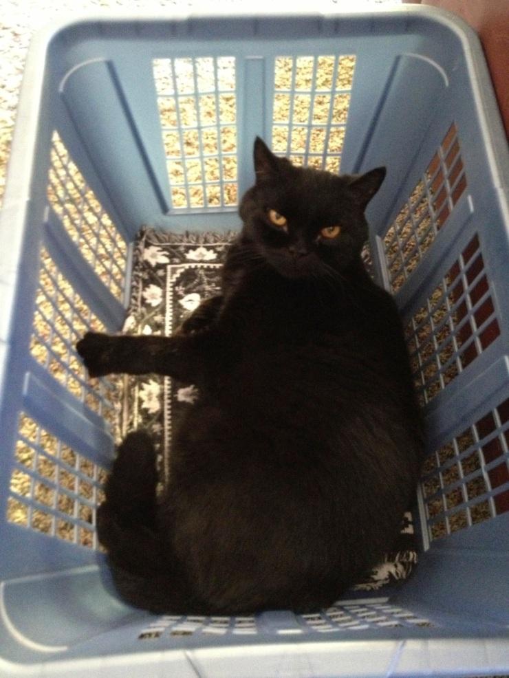 Felix in a laundry basket