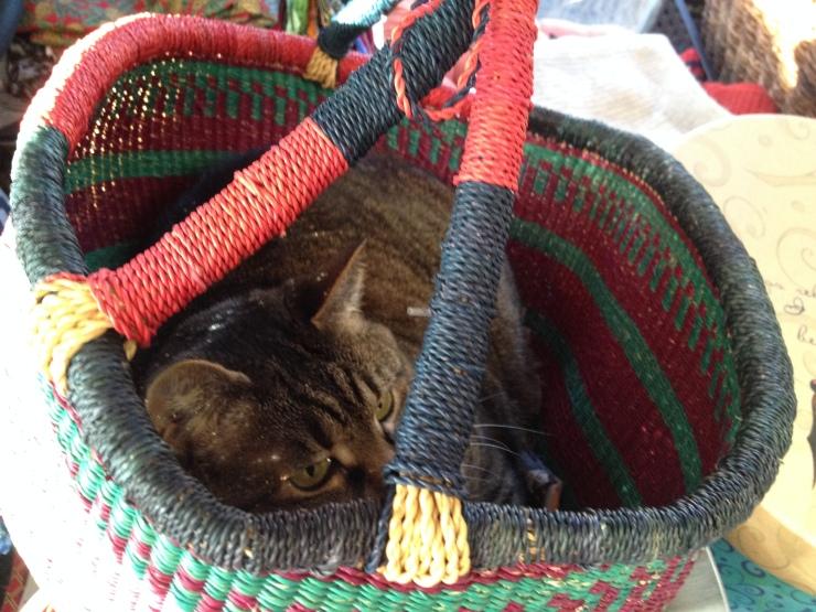 Kush in African basket