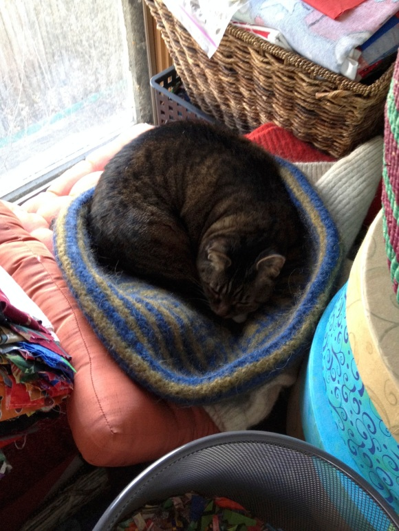 Kush in cat bed